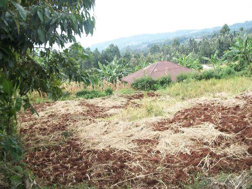 Gusii.com aaria Nka Bomame, Bogichoncho