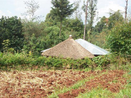 Gusii.com at home aaria Kiomakondo, Kitutu Masaba, Nyamira County